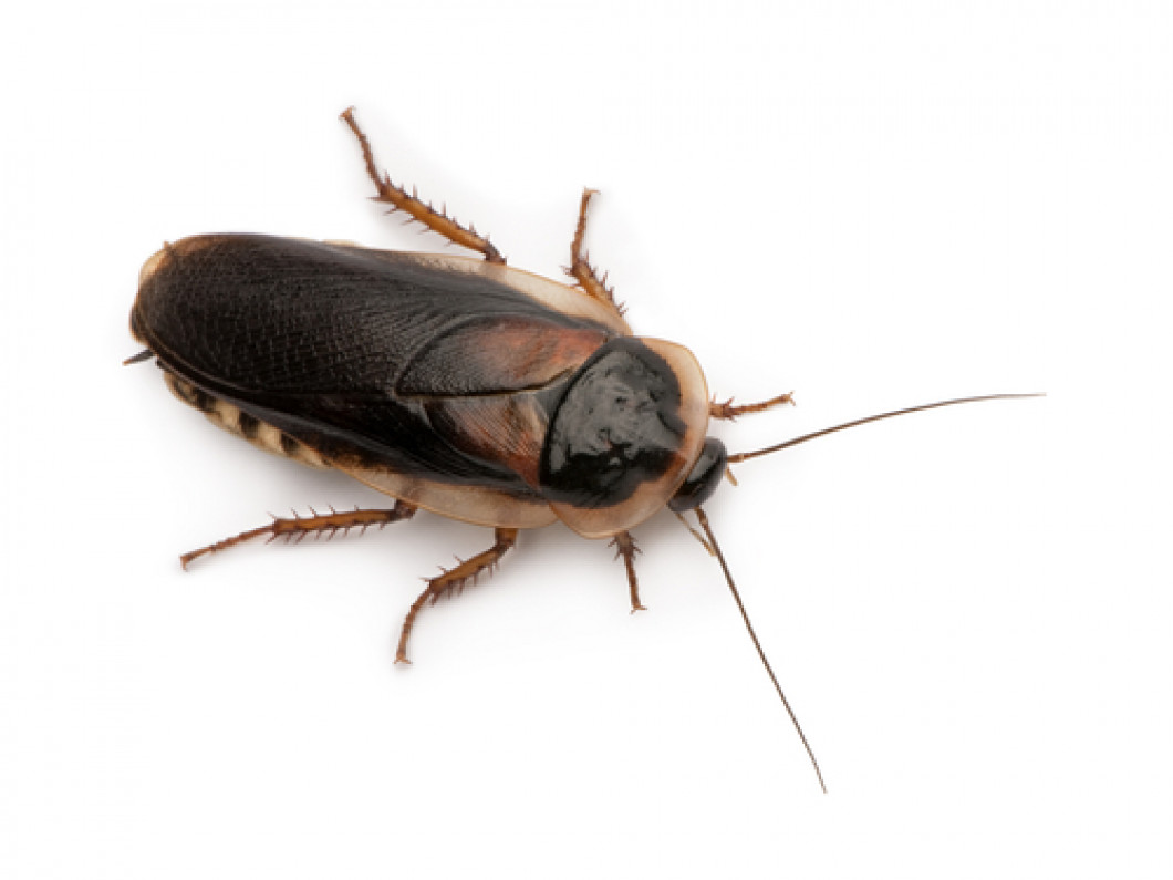Rid Your Building of Roaches